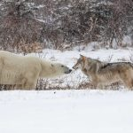 Preserving Wildlife with a Photography PC